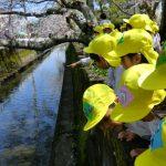 桜の木の下をお散歩